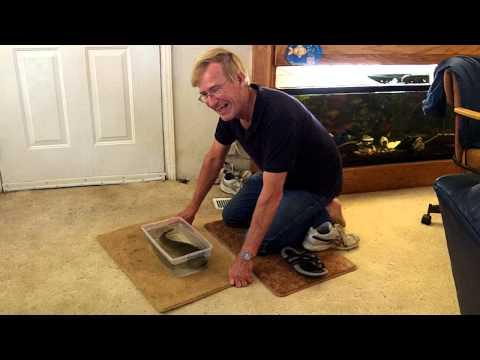 Electric Catfish Shocks Owner Repeatedly