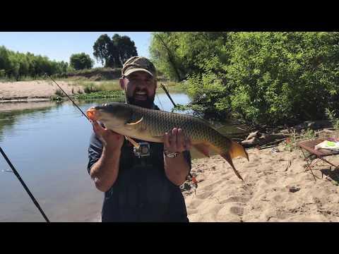 Carp Fishing On Merced River, CA, Our Secret Spot.