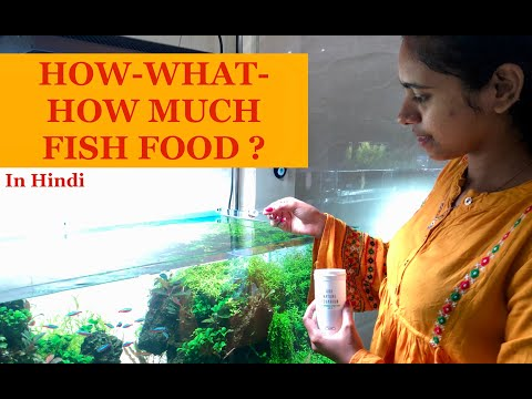 HOW & HOW MUCH Fish Food To Feed Fish In Aquarium,Live Food, Discus Food, Planted Aquarium Fish Food