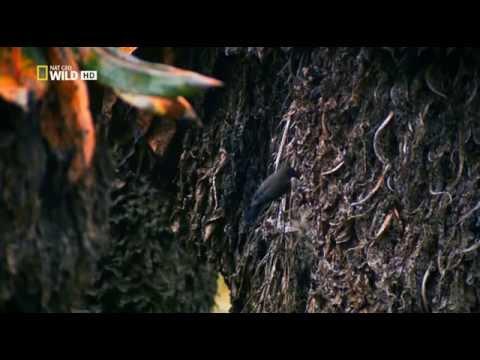 Дикий Нил (Wild Nile): Обретенный рай (Paradise Found). Серия 1 - Как поздравить с Днем Рождения