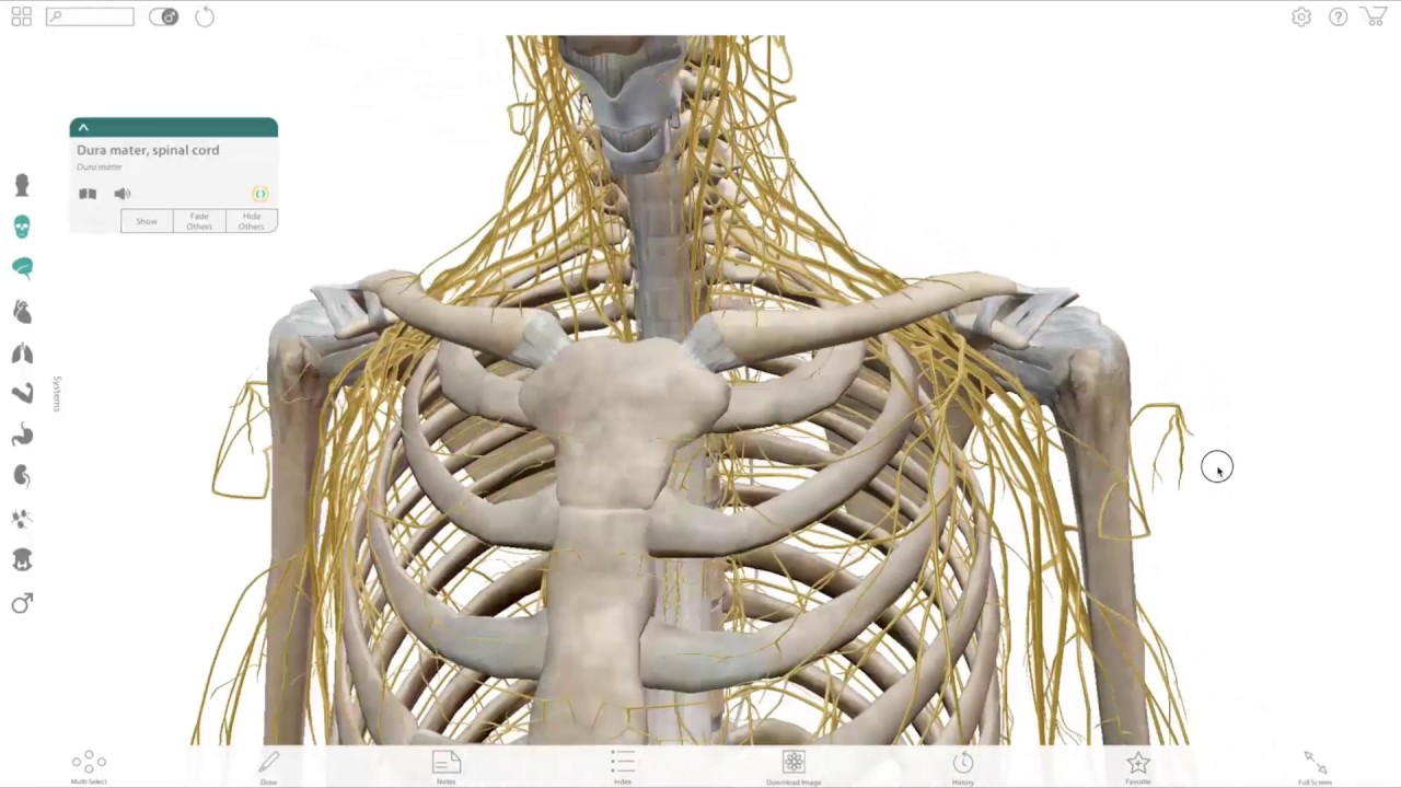 Visible Body Using Human Anatomy Atlas To Help Teach And Learn