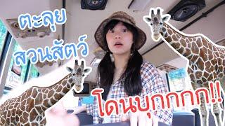 ตะลุยสวนสัตว์ Safari Park โดนยีราฟบุกกกก!! | Meijimill