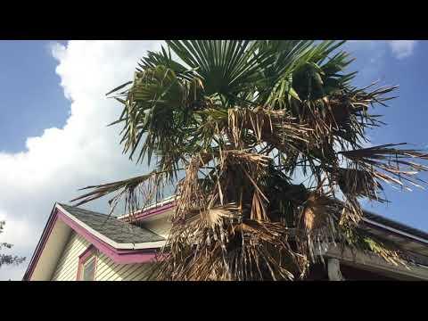 Rehoboth Beach Delaware Palm Trees Summer 2019