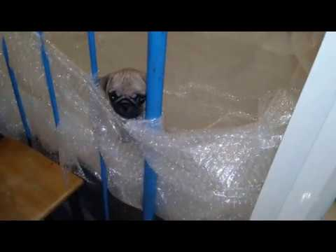 Dog Reaction To His New Home - Funny Dog Videos Lustige Hundevideos