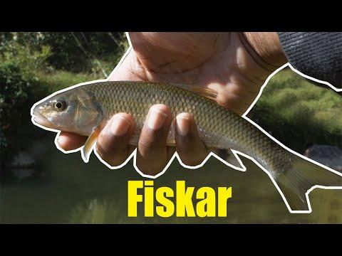 Maryland Fall Creek Fishing | Fun Multi-species Trip