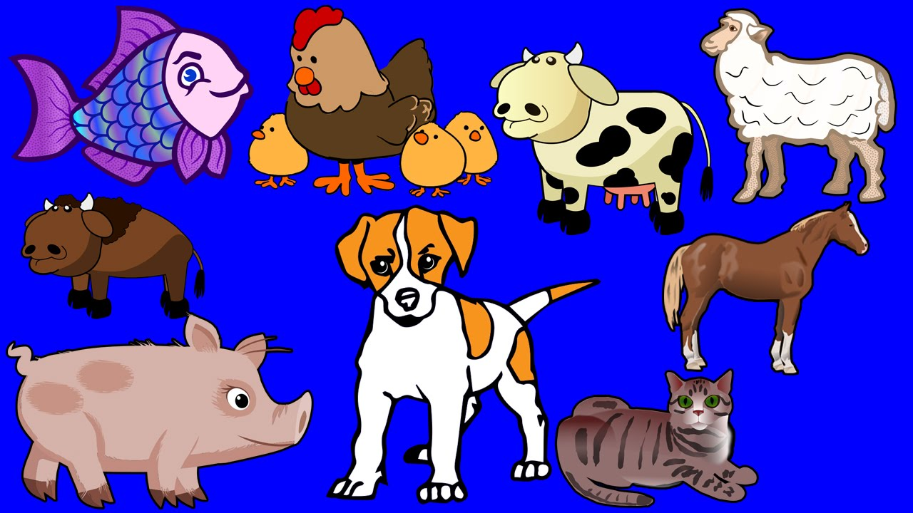 animals toddlers teaching learning children domestic