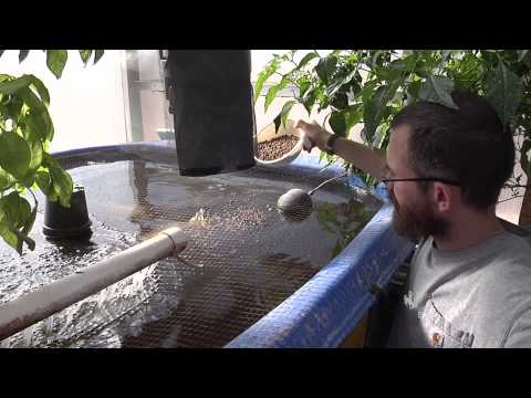 Aquaponics: Vertical Gardening with Fish, viability research project in University of Wyoming