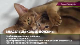 Правила содержания кошек в Алматы (10.07.16)