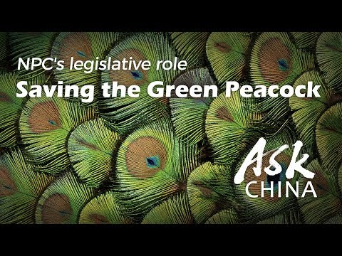 Ask China: Environmental Law Helps NGOs To Win 'war On Pollution'