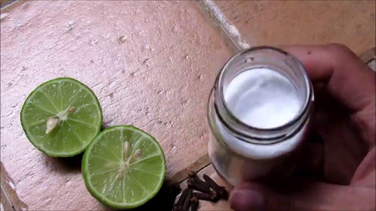 Como Eliminar El Mal Olor Del Refrigerador Youtube