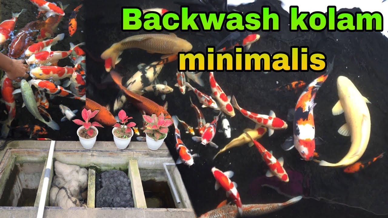Masih jernih di backwash - kolam koi minimalis mas jeje
