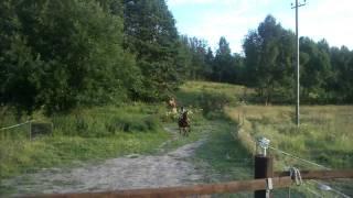 Ponny race