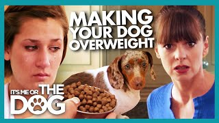 Owner Accidently Gives Dog DOUBLE the Recommended Food | It's Me or The Dog