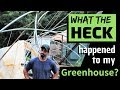 WHAT HAPPENED to my greenhouse?!?!?