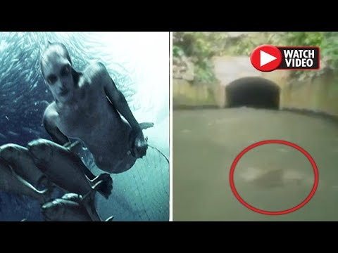 Mermaid Creature Filmed In Water Along Puerto Rico Canal