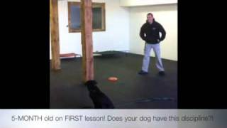 5-month Old!! Amazing Obedience!! Dog Training, Maryland, Dc, North Carolina!