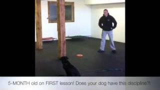 5-month Old!! Amazing Obedience!! Dog Training, Maryland, Dc, North Carolina!