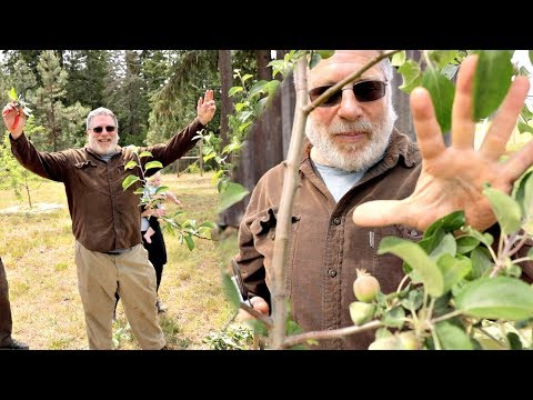 Don't Prune Fruit Trees Until You Watch This - Raintree