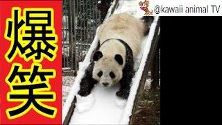 【関連動画】 滑り台が大好きな犬, 滑り台が好きな猫, 滑り台が好きな動...