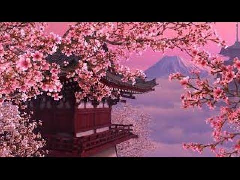 blooming sakura screensaver 4k