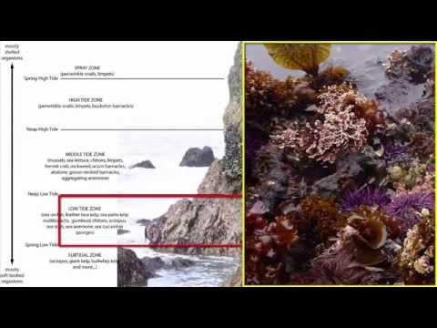 Benthos: Intertidal Zone