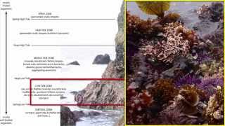 Benthos: Intertidal Zone