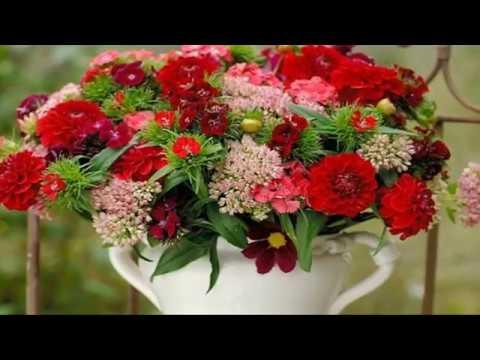 Imieninowe Kwiaty Dla Ciebie