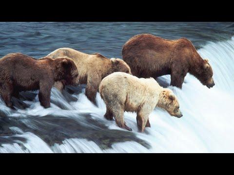 ALASKA - seria IMAX, cały film
