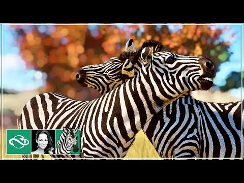 🦓 Ostrich & Zebras Habitat | Let's Play Planet Zoo Franchise Mode | BETA | #9