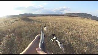 Harika fermalar net vuruşlar Bıldırcın avı 2018   quail hunt 2018 , охота на перепелов 2018