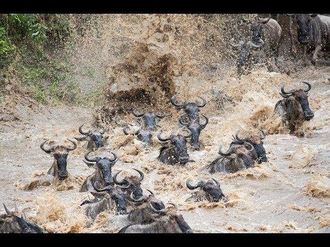 The Great Migration Safari 2017