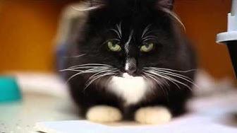 HESYn John-kissa etsii kotia!