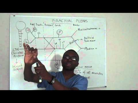 Brachial plexus made ridiculosuly simple lecture part 5