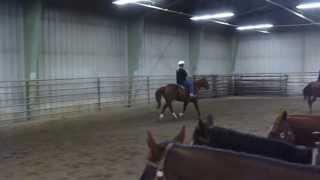 Montana State Western Equitation Class Oct. 9, 2013