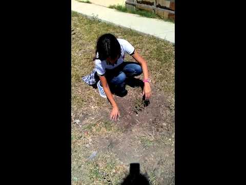 Planta un �rbol prepa mochis3-14 2015 zulemacastro