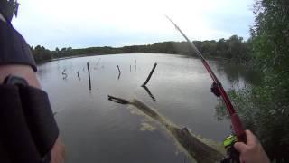 Ogromny lin z gruntu - ponad 60 cm !