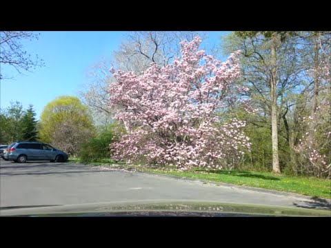 The Arboretum at Cornell University in Spring: A driving tou