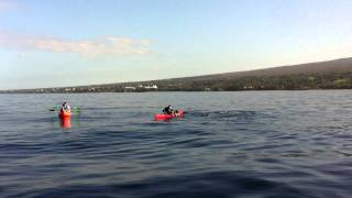 Humpback Whales Swim up to Kayaks in Maui Hawaii
