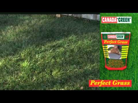 Oogarden Gazon Perfect Grass 1kg Canada Green