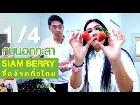 SIAM BERRY จี๊ดจ๊าดทั่วไทย (1) - วันที่ 15 Feb 2018
