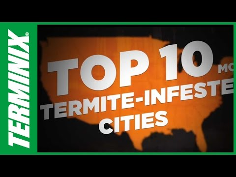 Protect Home From Termites - Top Infested Cities - Terminix