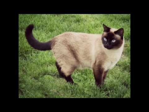 TOP 10 Cutest Cat Breeds In THE WORLD!!!