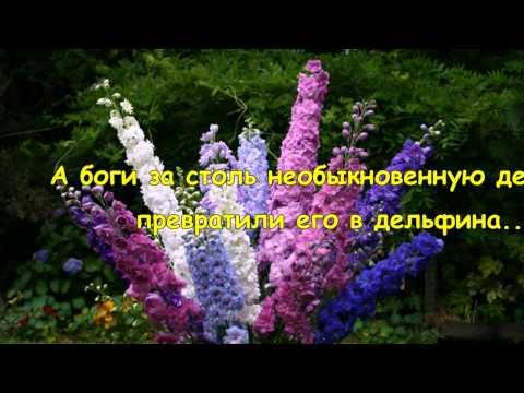 Дельфиниум Легенды о цветах