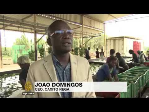 24551 rizne agriculture 003 001 Al Jazeera Angola diversifies economy after oil price crash