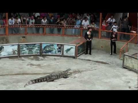 Xiếc cá sấu 2.MTS