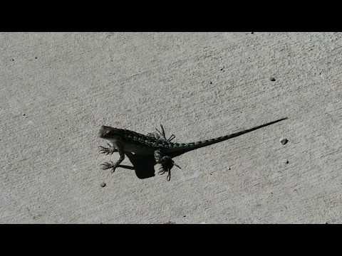 Reptiles & Chemtrail Free Blue Skies,  Comanche Trail,  San Antonio, Texas 10-18-17