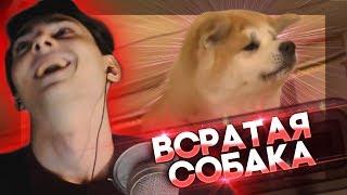 YOURANUS | Всратая Собака Путина | Dolphey