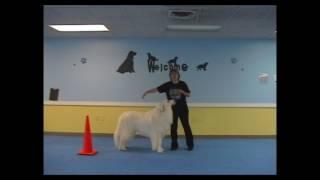 Video Teach your Dog Barrel Racing (Go Around) download MP3, 3GP, MP4, WEBM, AVI, FLV Agustus 2018