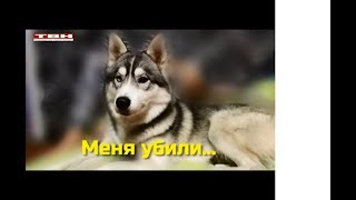 В Новокузнецке Убили расчленили собаку, ЧТо делать?