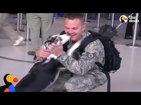Soldiers Reunited with Dogs: Veterans Day 2017 | The Dodo